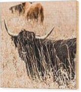 Black Highland Cow Wood Print