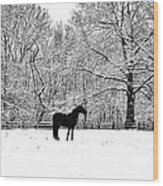 Black Horse In The Snow Wood Print