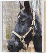 Black Horse Wood Print by Susan Leggett