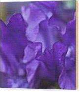Black Iris Up Close Wood Print