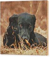 Black Labrador Wood Print