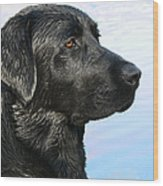 Black Labrador Retriever After The Swim Wood Print