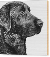 Black Labrador Retriever Dog Monochrome Wood Print
