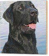 Black Labrador Retriever Dog Smile Wood Print