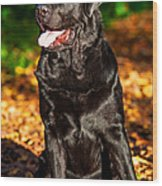 Black Labrador Retriever In Autumn Forest 1 Wood Print