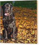 Black Labrador Retriever In Autumn Forest Wood Print
