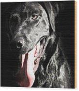 Black Labrador Retriever Wood Print by Paulina Szajek