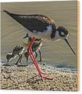 Black Neck Stilt And Babies Wood Print