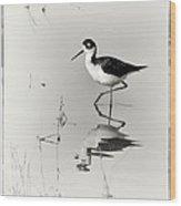 Black-necked Stilt At Carson Lake Wetlands Wood Print by Priscilla Burgers