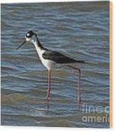 Black Necked Stilt Wood Print