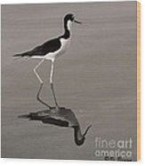 Black-necked Stilt Wood Print
