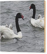 Black Necked Swans Patagonia 1 Wood Print