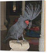 Black Palm Cockatoo Wood Print