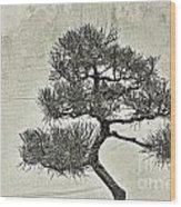 Black Pine Bonsai In Monochrome Wood Print