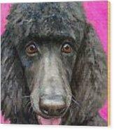 Black Poodle On Hot Pink Wood Print