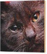 Black Puppy Cat Wood Print