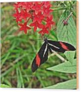 Black Red And White Butterfly Wood Print