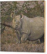 Black Rhino Tanzania Wood Print