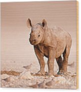 Black Rhinoceros Baby Wood Print