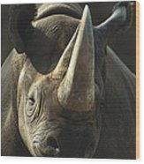 Black Rhinoceros Portrait Wood Print