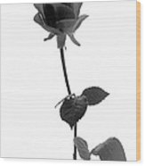 Black Rose Wood Print