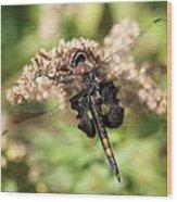 Black Saddlebags Dragonfly At Rest Wood Print