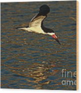 Black Skimmer Reflections Wood Print