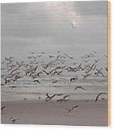 Black Skimmers On The Beach At Dawn Wood Print