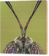 Black Soldier Fly 3x Wood Print