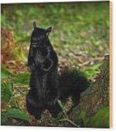Black Squirrel Wood Print