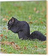 Black Squirrel Wood Print