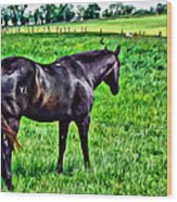 Black Stallion In Pasture Wood Print