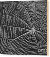 Black Star.. Wood Print