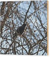 Black  Starling Wood Print