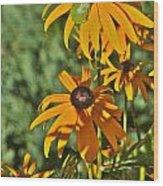 Black Susan Tree Frog Wood Print