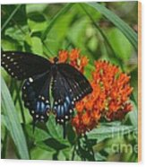 Black Swallow Tail On Beautiful Orange Wildlflower Wood Print