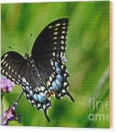 Black Swallowtail Butterfly In Garden Wood Print