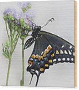 Black Swallowtail II Wood Print