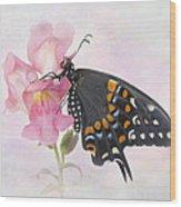 Black Swallowtail Iv Wood Print