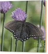 Black Swallowtail On Chives Wood Print