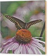 Black Swallowtail On Cone Flower Wood Print