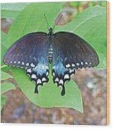 Black Swallowtail On Tulip Poplar Wood Print