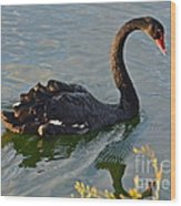 Black Swan At Sunset Wood Print
