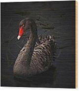 Black Swan Wood Print