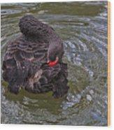Black Swan Gladys Porter Zoo Texas Wood Print