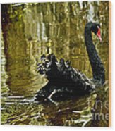 Black Swan Lake Wood Print