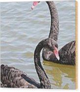 Black Swan Pair Wood Print