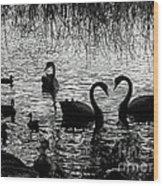 Black Swan Silhouette Wood Print