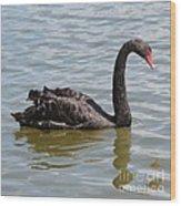 Black Swan Square Wood Print