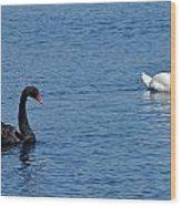 Black Swan White Swan Wood Print